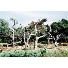 TK22 Dead Trees (5)