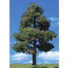 """TR3501 Sun Kissed Trees 3/4""""- 1 1/4"""" (8)"""